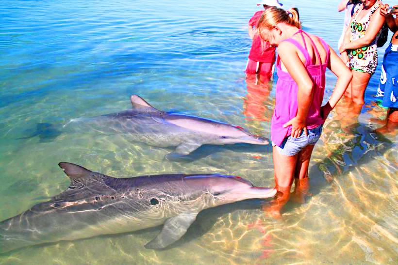дельфины в Судаке